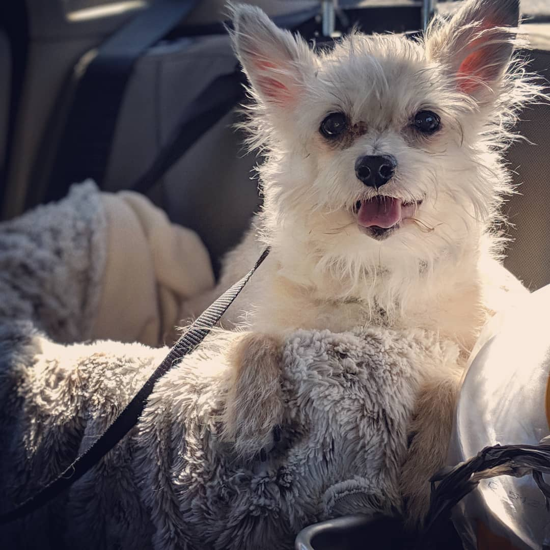 """Sohma G. Dawling on Instagram: """"Somebody loves their new #travel booster seat! . Just sitting in the car in the AC while we make a pitstop. Blasting #mymorningjacket song…"""""""